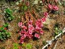 cvetoče rastline