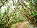 Gozd v gorovju Anaga