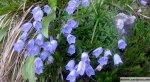 cvetje-ob-poti2