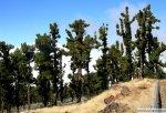 borovci-visoko-v-hribih