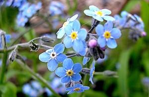 Cvetje po poti
