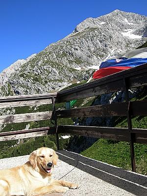 Psička Tara, v ozadju vrh Grintovca